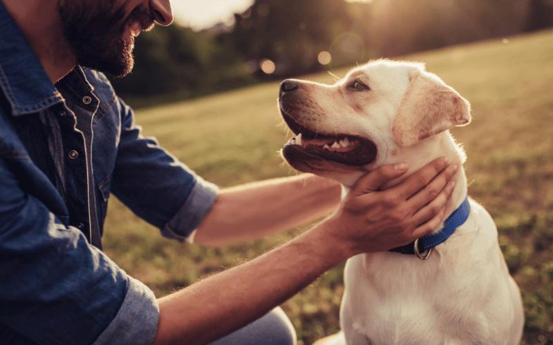 probiotyk dla psa